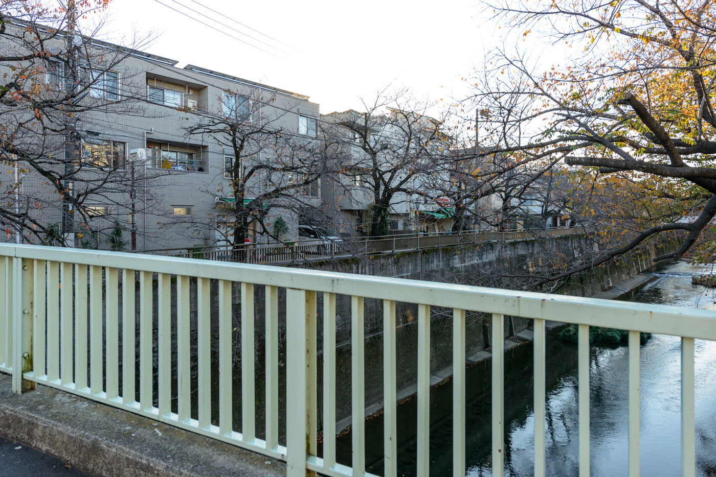 板橋十景 石神井川の桜並木
