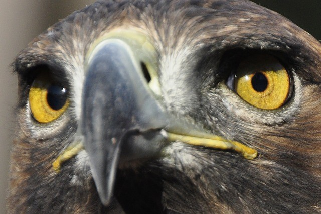 Unser Familienkrafttier - der Adler
