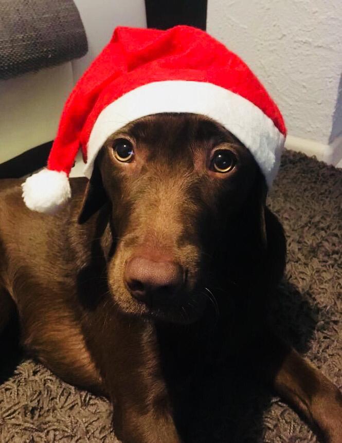 Paula freut sich auch schon auf Weihnachten