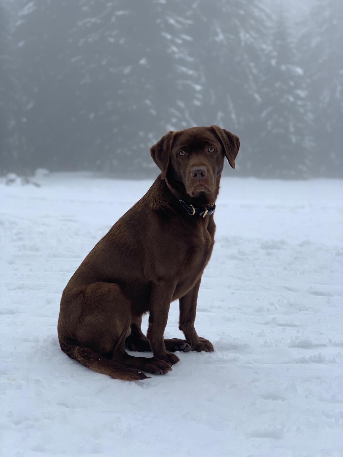 Erster Spaziergang im Schnee