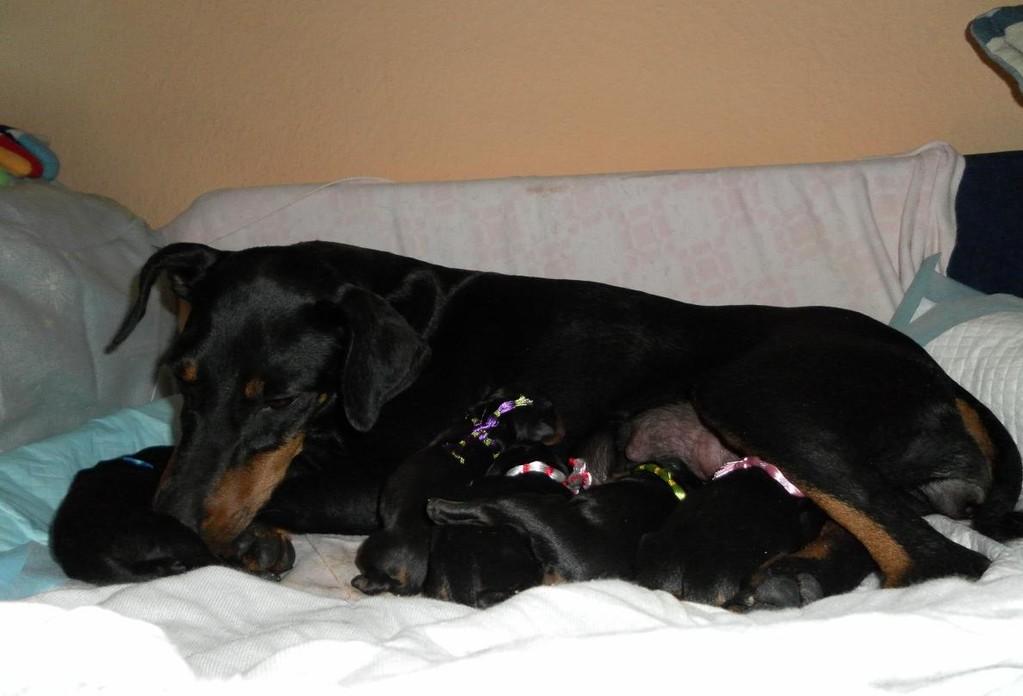 Um 12:25 Uhr u. 12:38 Uhr werden noch zwei Mädels geboren.
