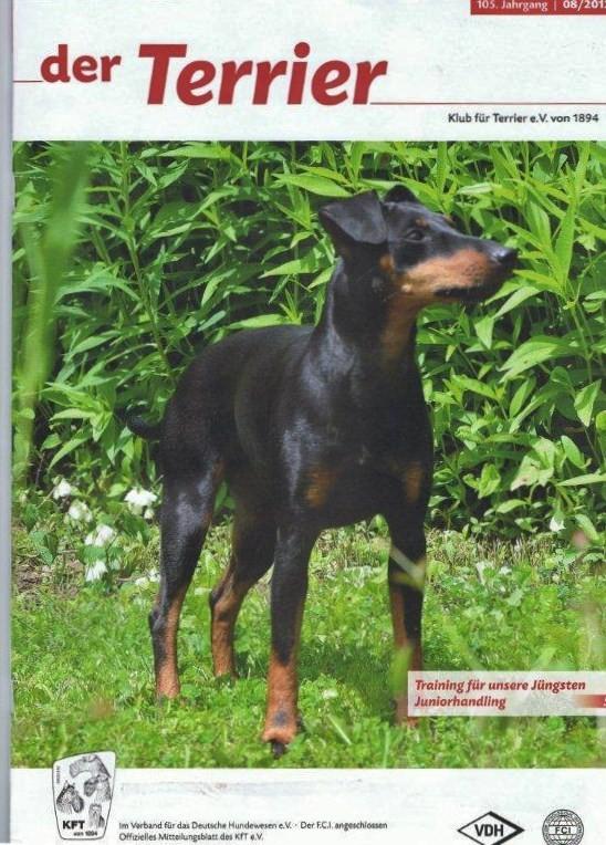 """Titelbild der Augustausgabe 8/2012 """"der Terrier"""" Klub für Terrier e.V. 1894"""