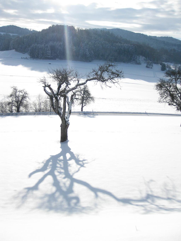 Siegerfoto von Hildegard Falk