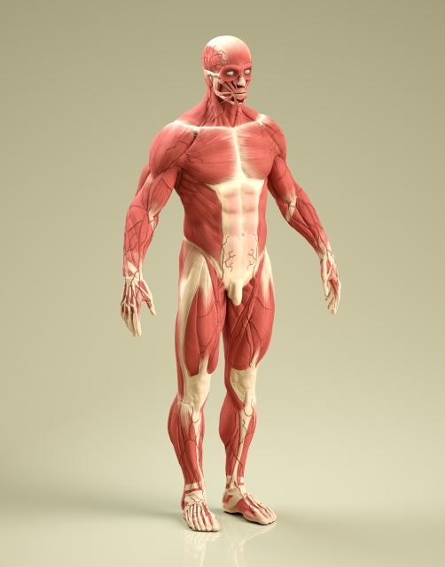 筋肉のケガ