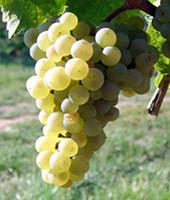 Weingut Ruzika , Riesling