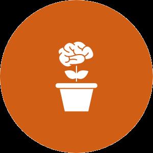 Entfaltung: Entfaltung von Themen, Potentialen, Wünschen, Träumen und Themen in der Beratung. Psychologische Beratung und Coaching in Linz, Elisabeth Göbl