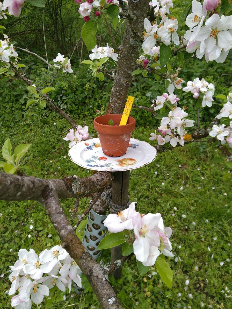 Zurzeit blühen die Apfelbäume im Sihltal - es sieht wunderschön aus! Liebe Grüße aus der Schweiz, Sabine