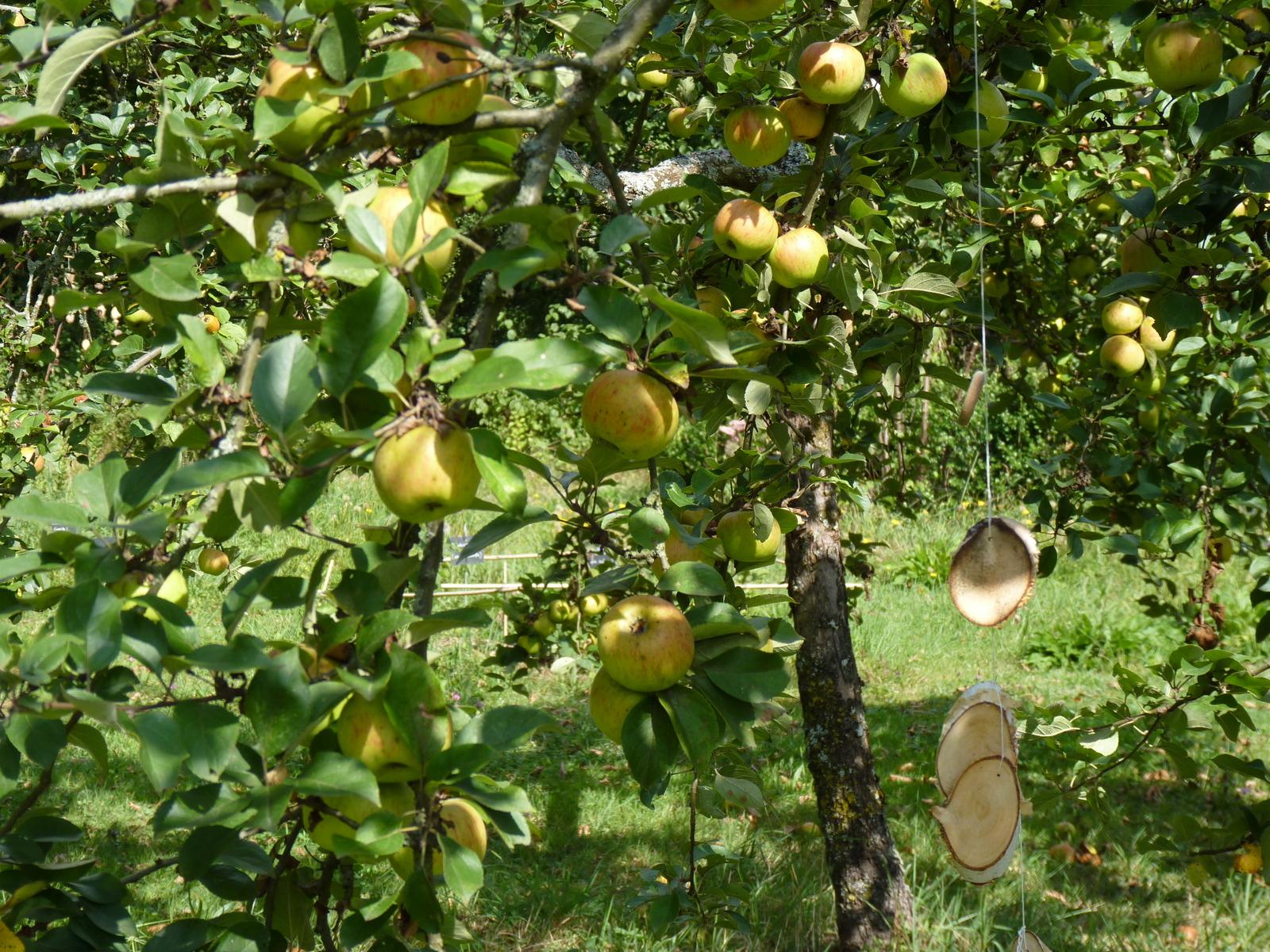 De jolies pommes