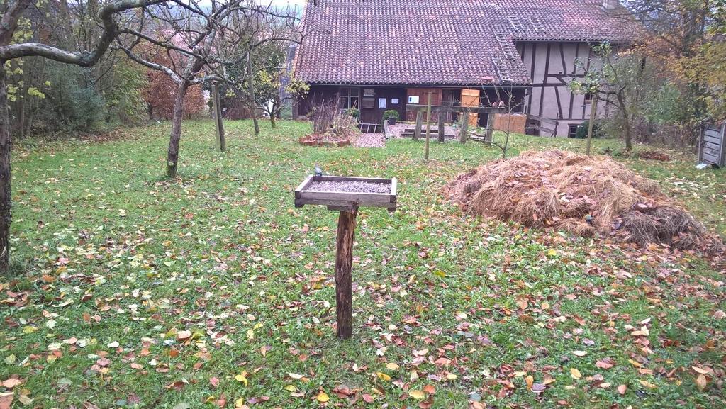 Les mésanges sont présentes durant l'hiver