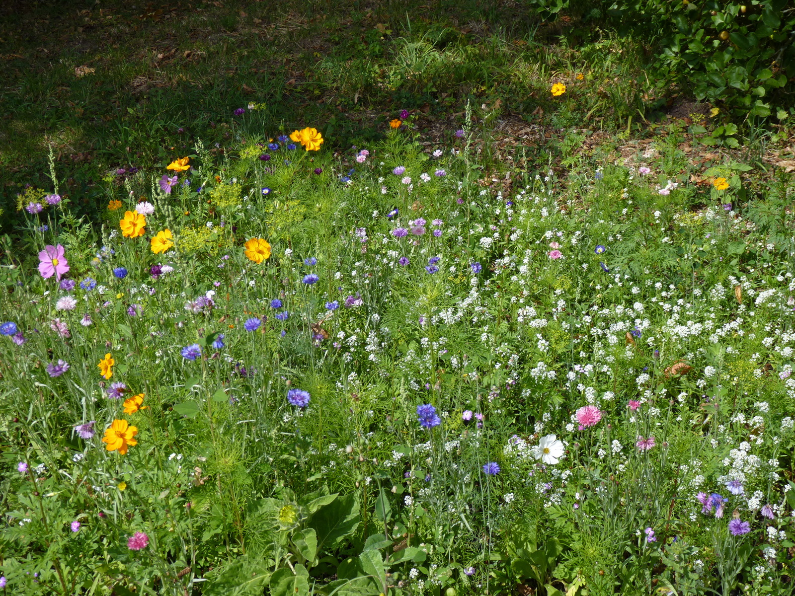 Le parterre de fleur accueille les insectes pollinisateurs