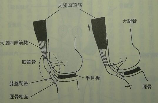 膝関節の動き