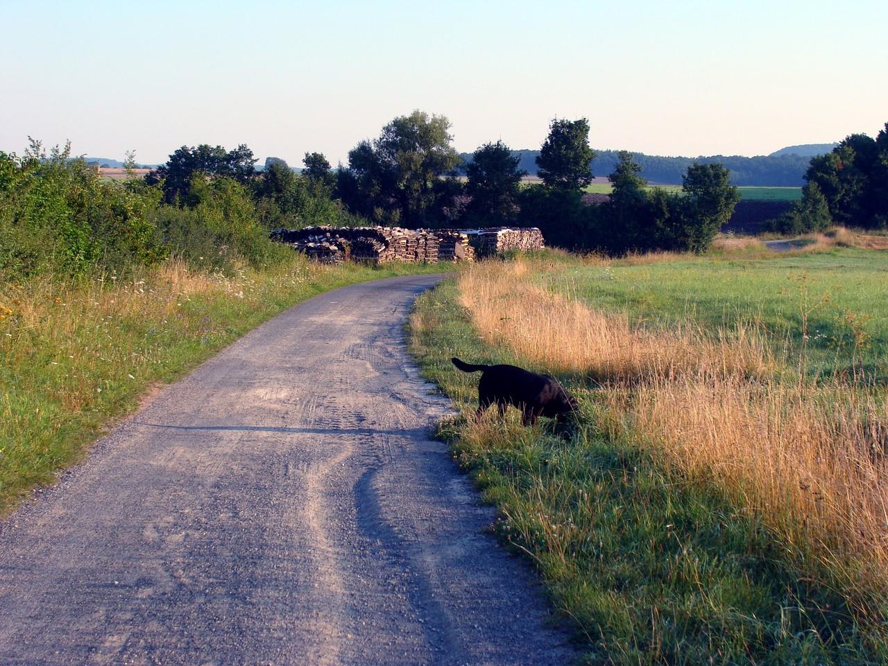 Spaziergang mit Basco. Vom Stellplatz aus rechts geht es ins Feld und zum Wald.