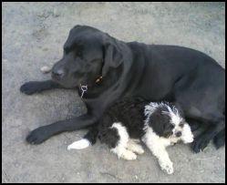 Basco und Lucy.....seine kleine Freundin aus Leipzig