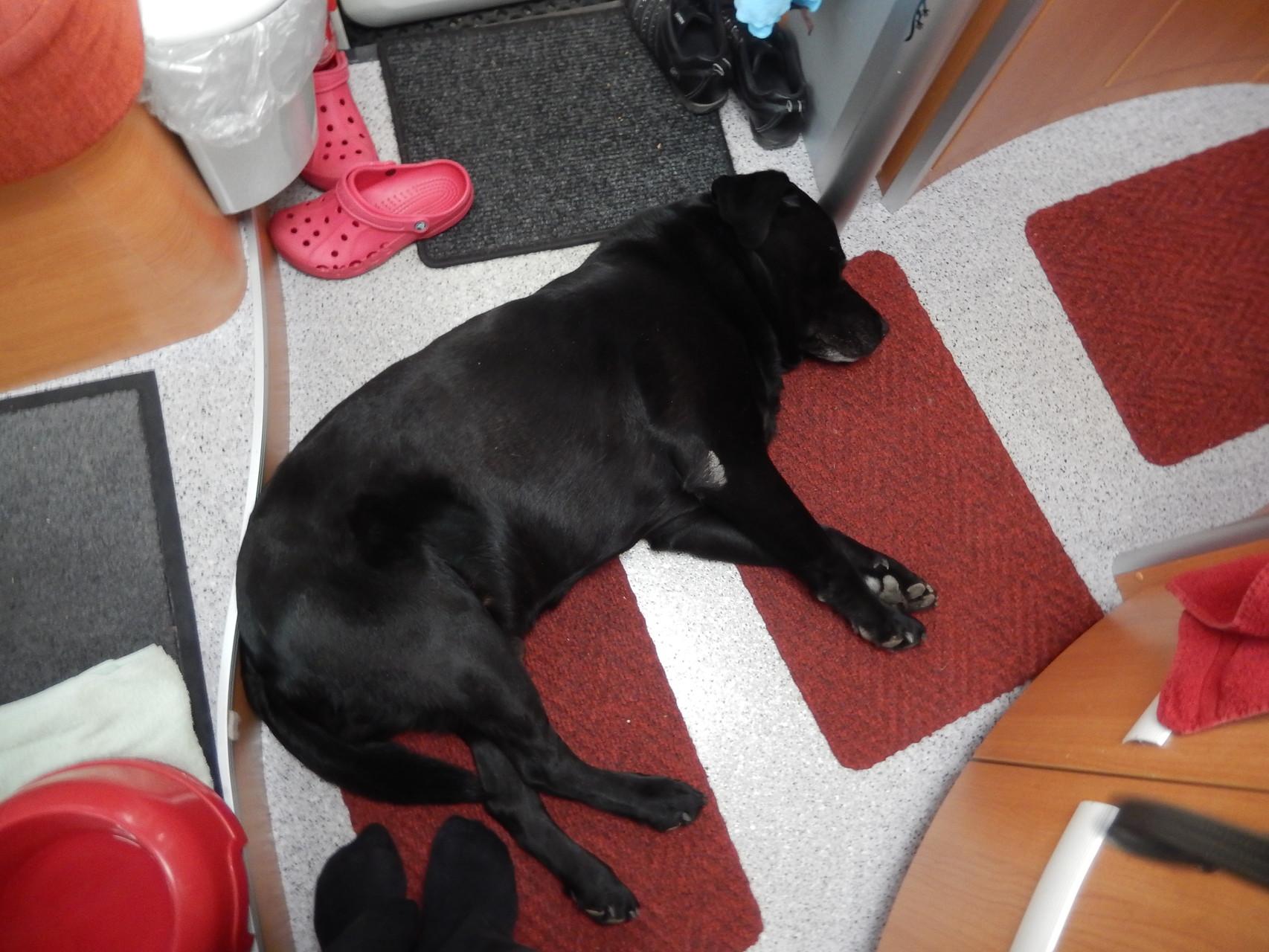 Basco hat sich gleich schlafen gelegt :) . Das war also Dingolfing.