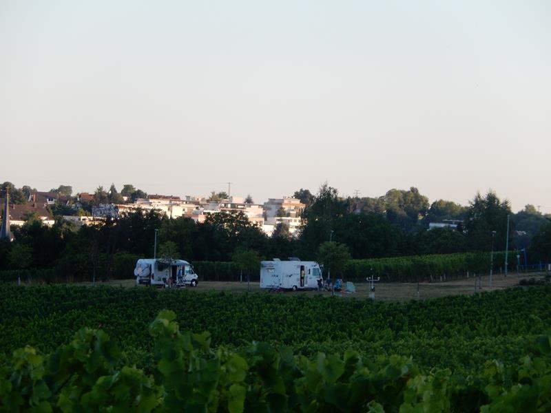 Abends drehe ich mit Basco nur eine kleine Runde durch die Weinberge
