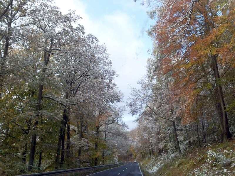 Hier ist noch etwas Schnee auf den Bäumen.