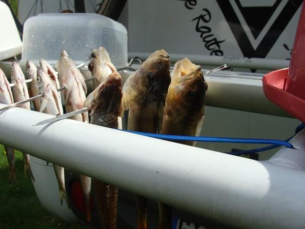 Frank B. hat auch Fische an Land gezogen wollte aber überhaupt nicht mit essen