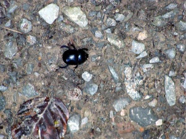 Und von diesen Käfern gibt es unzählige hier.