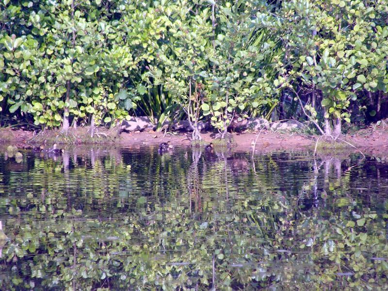 Gleich früh am Morgen ist die Entenfamilie unterwegs. Könnte ein Suchbild sein.