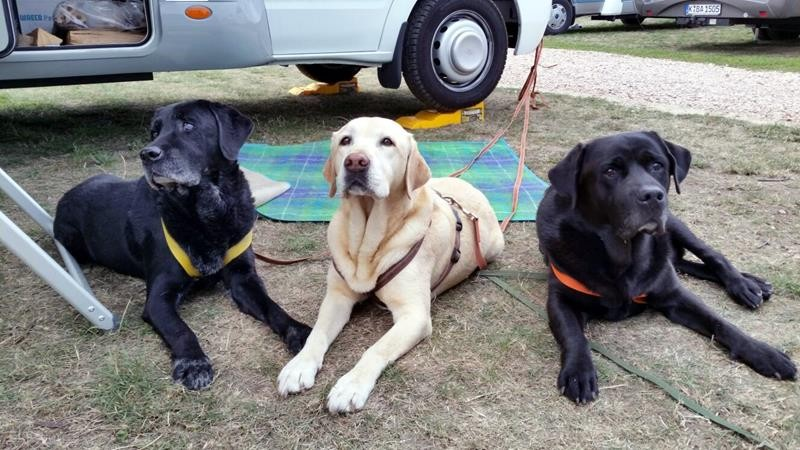Drei brave Hunde