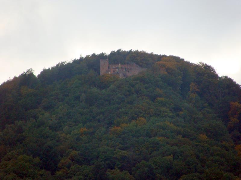 Die Riedburg