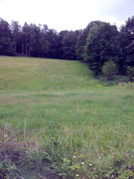 Das Bild hatte ich mit dem Handy gemacht. Ein Rudel Hirsche hat unmittelbar vor uns den Weg gekreutzt und steht nun dort oben am Waldrand. Sieht man leider kaum.
