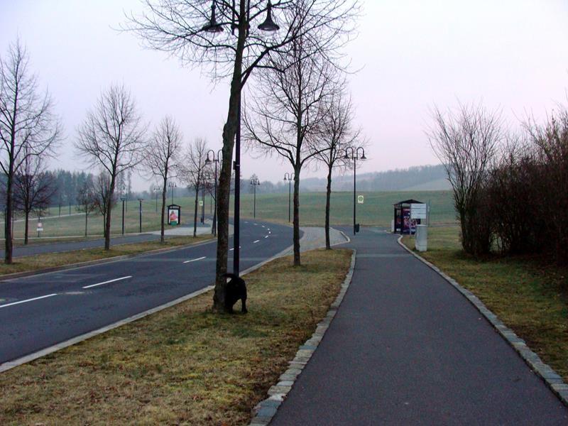 Am nächsten Morgen gehe ich mit Basco spazieren.
