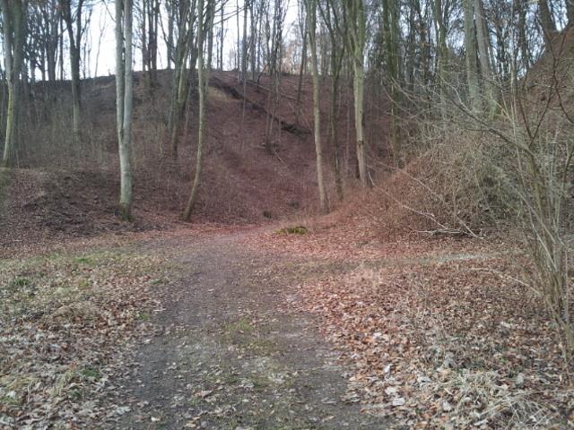 Oberhalb vom Stellplatz führt ein Weg zum Wald.