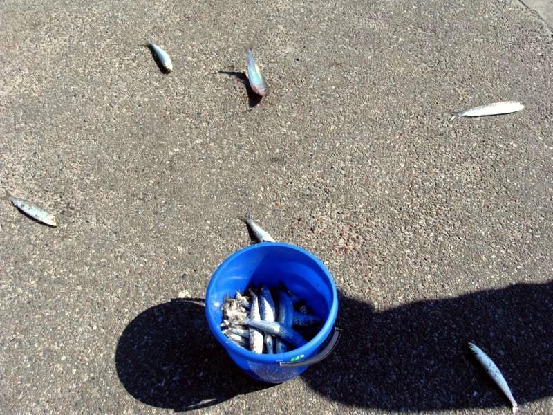Die holen hier Unmengen an Fischen aus dem Wasser.