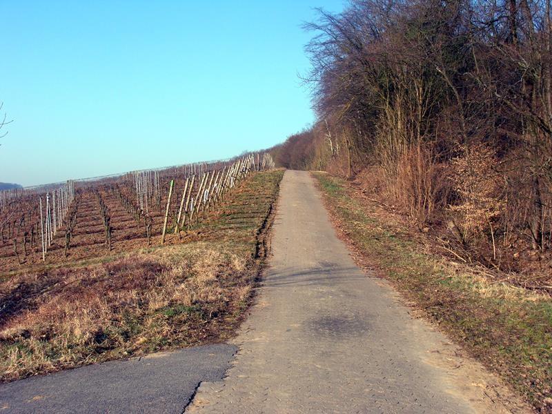 Hier kann man sehr schön spazieren gehen - auch durch den Wald.
