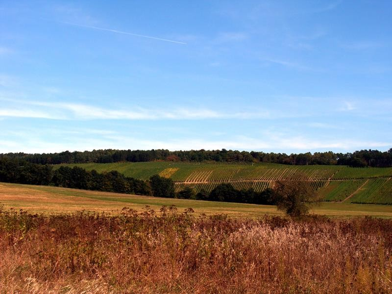 Ich mache einen Spaziergang durch die Weinberge