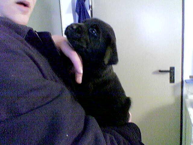 Basco ca 3 Wochen alt. Wir haben ihn beim Züchter 2x besucht, eh wir ihn zu uns geholt haben.