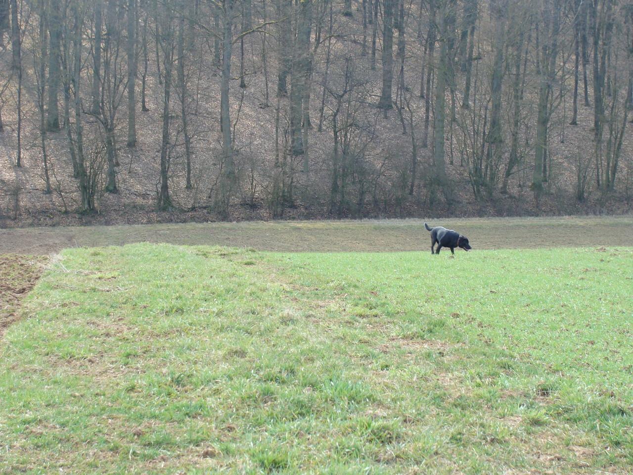 Zwischen den Feldern führen immer Wege Richtung Wald. So kann man den Rundgang abkürzen.