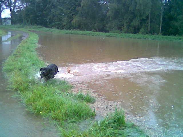 Wenn Die Wiesen überschwemmt sind, ist das jedesmal ein Fest für Basco. Da hält ihn nichts mehr.