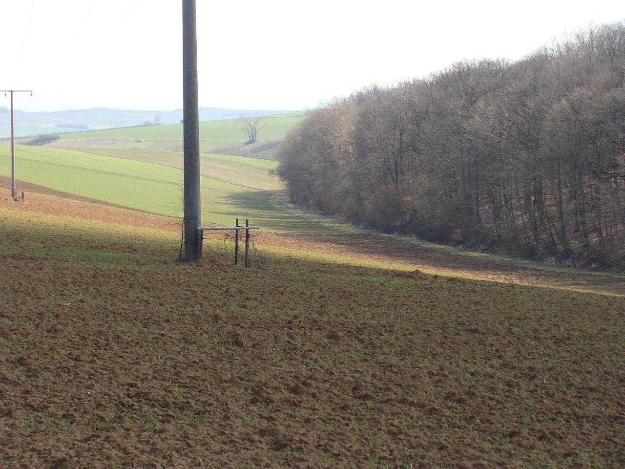 Nach dem Wald links halten und man landet wieder in Wipfeld.