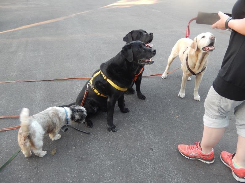 Der Versuch, alle vier auf ein Bild zu bekommen.