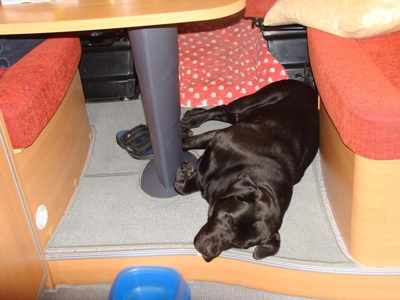 Und Basco schlummert schon. Der hat jetzt auch viel mehr Platz.