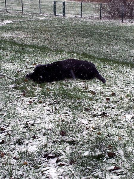 Es wird immer mehr Schnee. Basco freut sich