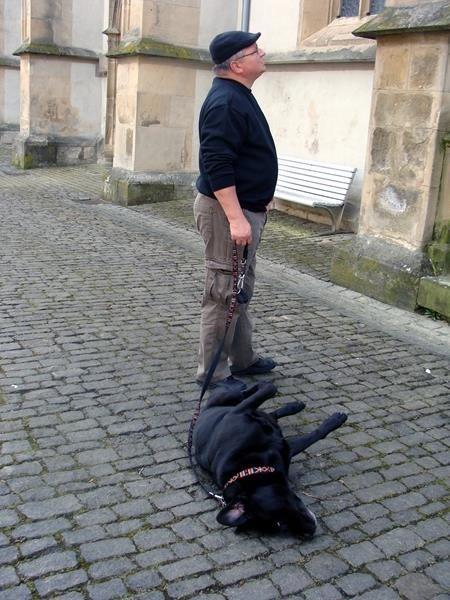 Basco ist weniger interessiert, er genießt den kühlen Boden.