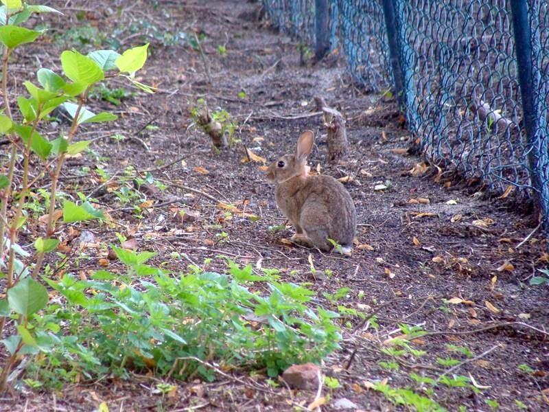 Auch im Ort hoppeln an einem die Hasen vorbei.