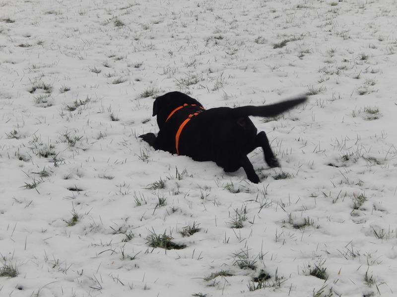 Basco freut sich über den Schnee
