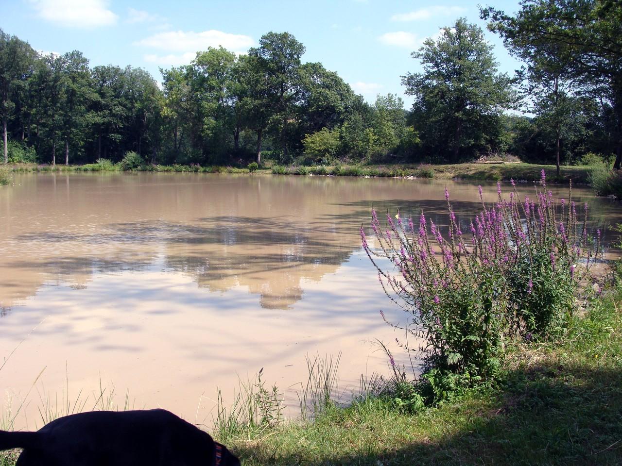 Mitten im Wald liegt dieser See.