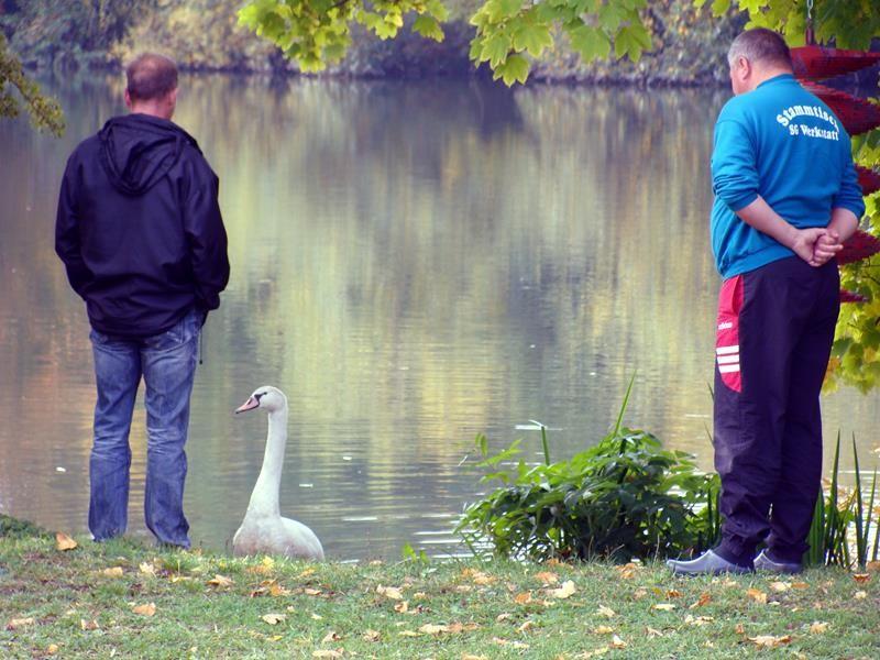 Der Schwan war sehr neugierig und hoffte wohl auf einen leckeren Bissen.