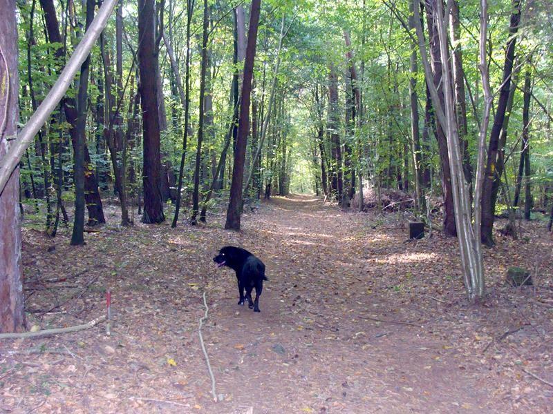 Durch einen kleinen Wald geht es zurück zum Camp