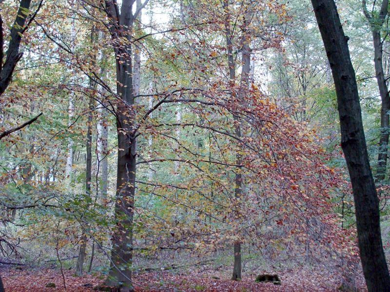 Herbstwald. Ich war auch im angrenzenden Wald spazieren. Hatte die Kamera leider da nicht mit.