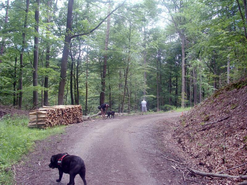 Und es geht wieder in den Wald Richtung Schützenhaus