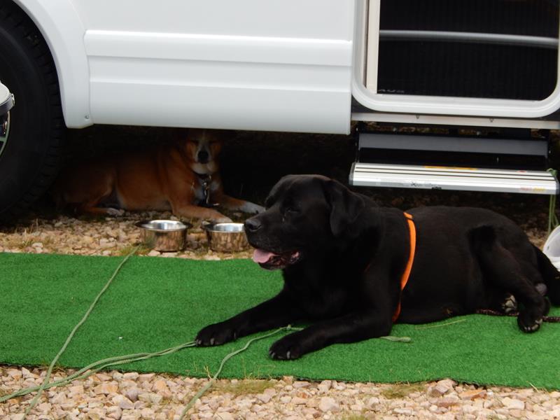 die Hundis suchen Schatten.