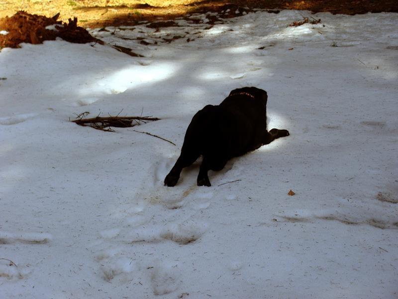 Ein Schneebad hat er sich auch verdient.