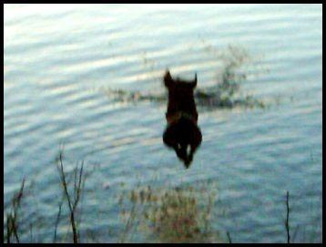 Wasserratte......2m Freiflug, bevor.......