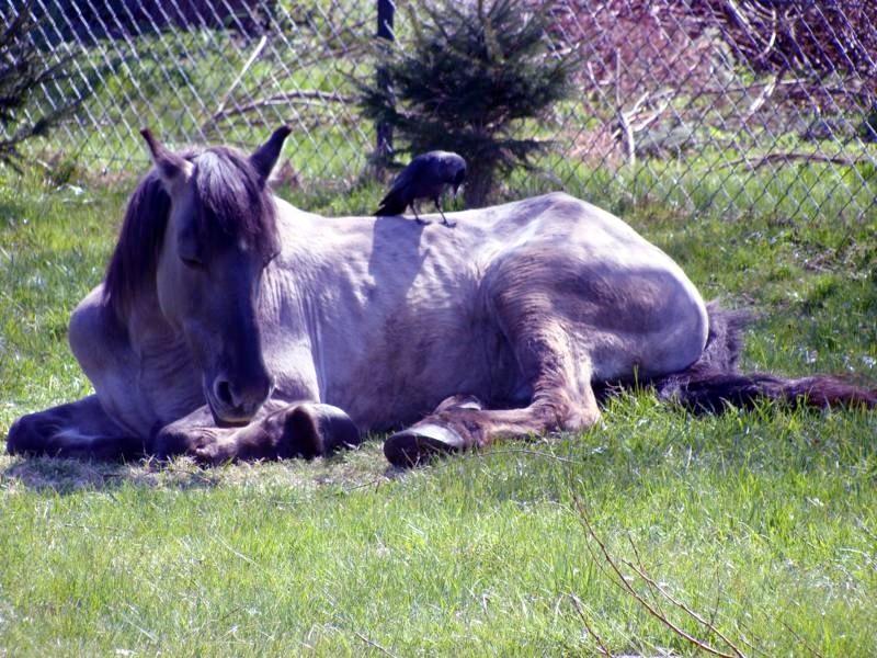 Das Pferd scheint schon sehr alt zu sein. Ein trauriger Anblick.